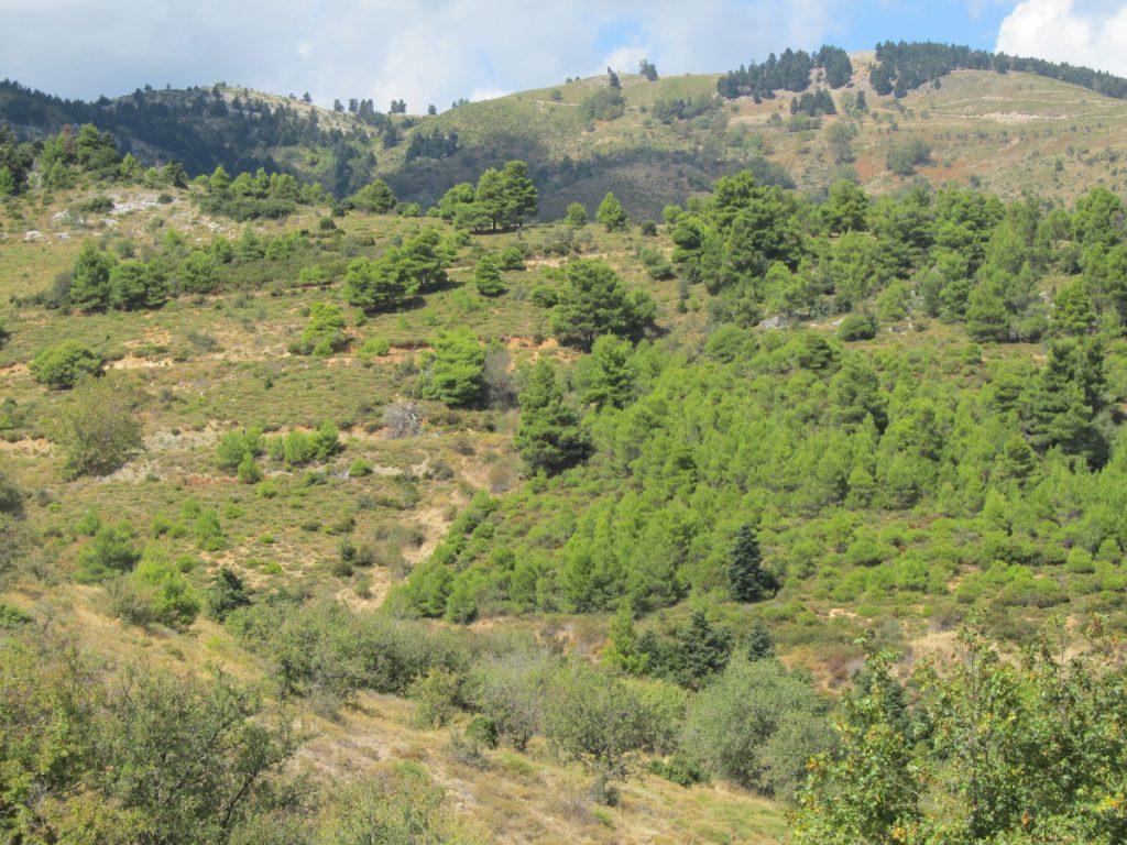 Δασικές εκτάσεις